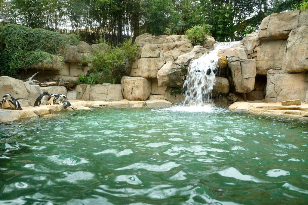 Dallas Zoo penguins