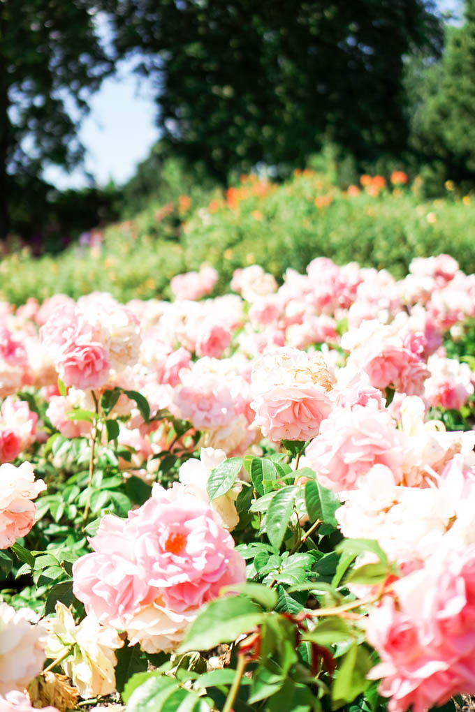 Queen Mary's Garden in London
